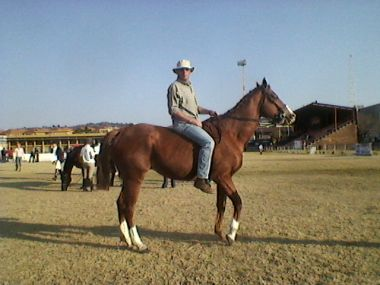 equusvirgo