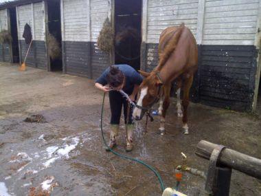 Horse247